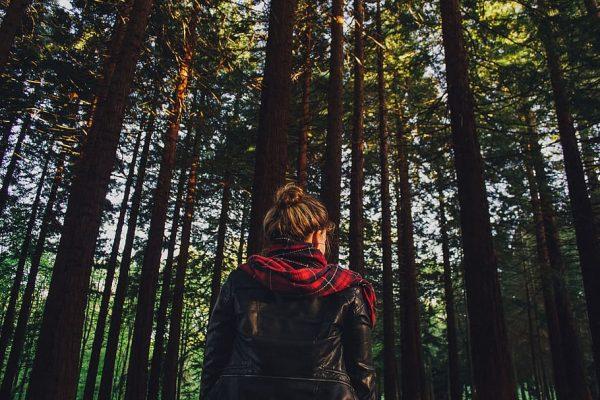 sund en skov