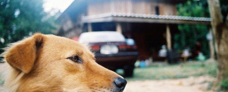 vakantie denemarken met hond